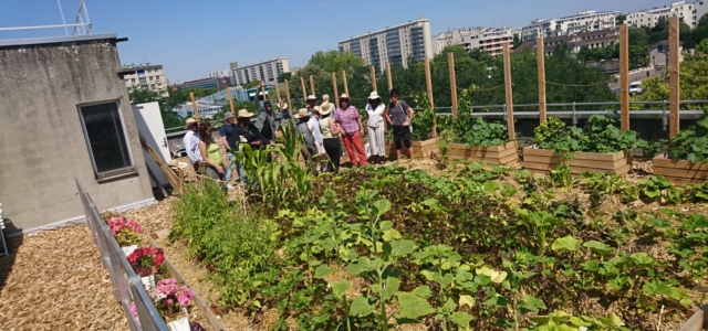 Formation – Accompagnement au projet d'agriculture urbaine